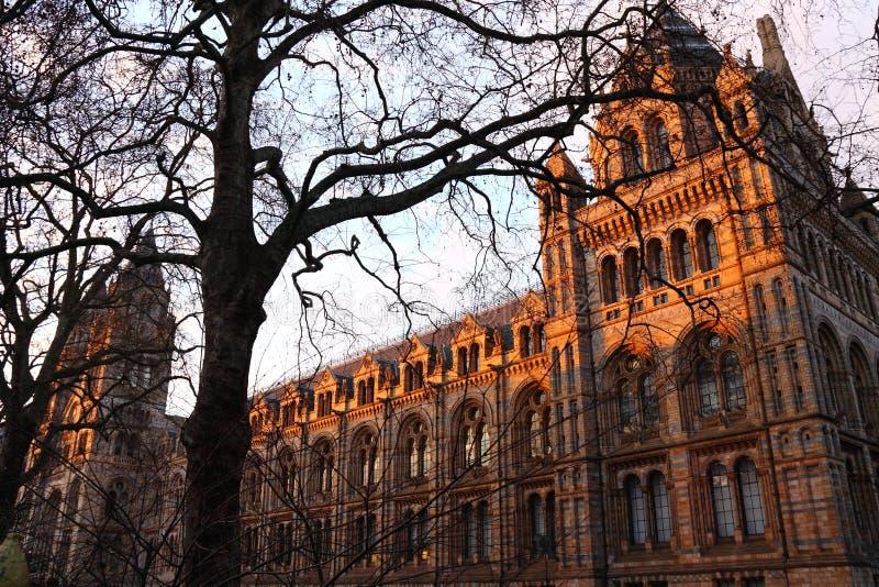 βρετανικό μουσείο ιστορίας φυσικό στοκ εικόνα με δικαίωμα ελεύθερης χρήσης