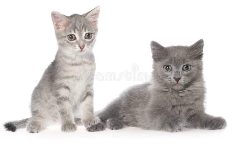 Βρετανικό τιγρέ γατάκι shorthair και γκρίζα συνεδρίαση γατακιών στοκ φωτογραφίες με δικαίωμα ελεύθερης χρήσης