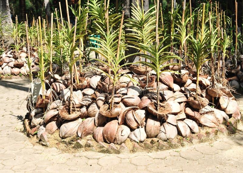Βρεφικός σταθμός orchid στοκ εικόνα
