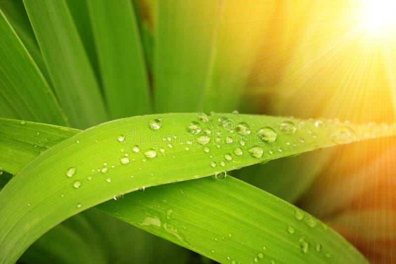 βροχή απελευθερώσεων στοκ εικόνες με δικαίωμα ελεύθερης χρήσης