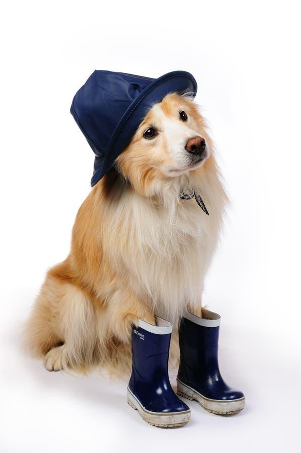 βροχή καπέλων σκυλιών μποτών στοκ φωτογραφίες