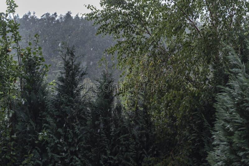 Βροχή σε ένα σκοτεινό δάσος στο τοπίο φθινοπώρου το βράδυ στοκ φωτογραφία με δικαίωμα ελεύθερης χρήσης