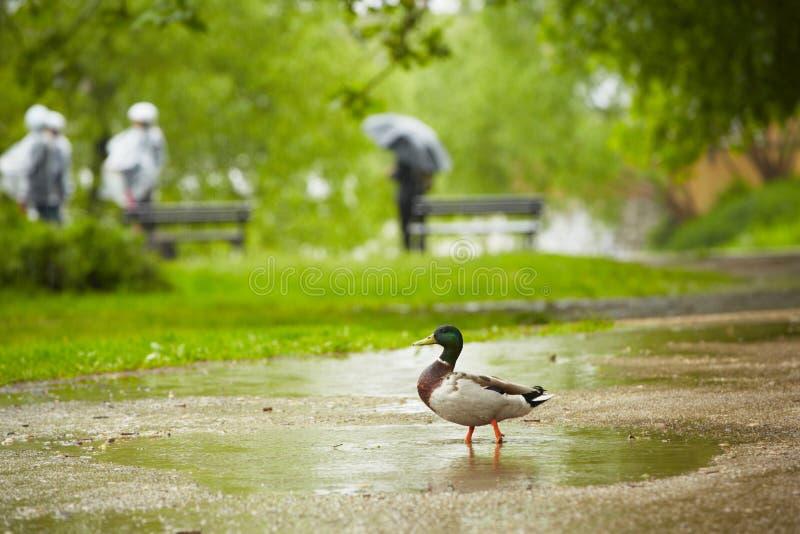 Βροχή στην πόλη στοκ φωτογραφία