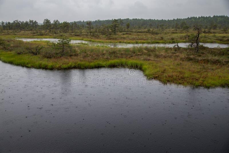 Βροχή στο έλος Kakerdaja στοκ εικόνες με δικαίωμα ελεύθερης χρήσης