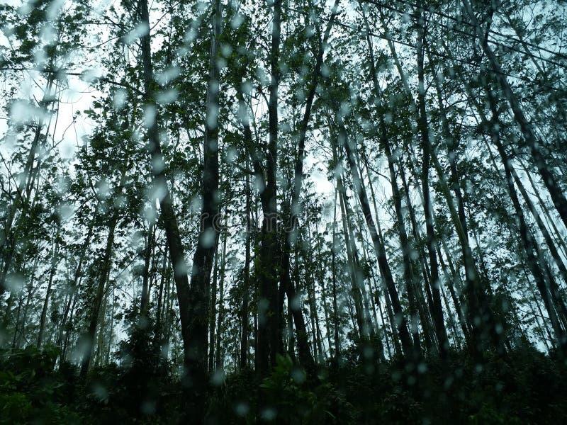 βροχή στο δάσος στοκ εικόνες με δικαίωμα ελεύθερης χρήσης