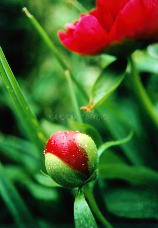 Download βροχή στοκ εικόνα. εικόνα από κόκκινος, εποχές, φύση, πράσινος - 113051