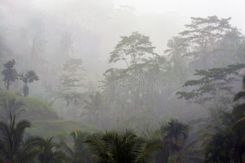 Βροχερή ημέρα στο Μπαλί στοκ φωτογραφίες