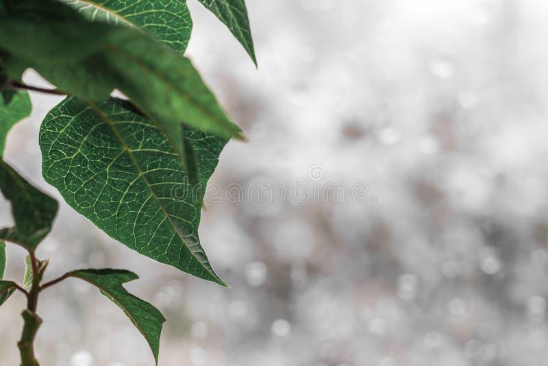 Βροχερό παράθυρο πίσω από ένα φύλλο πράσινων φυτών στοκ εικόνα
