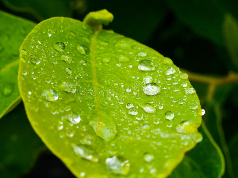 Βροχερό φύλλο στοκ φωτογραφίες