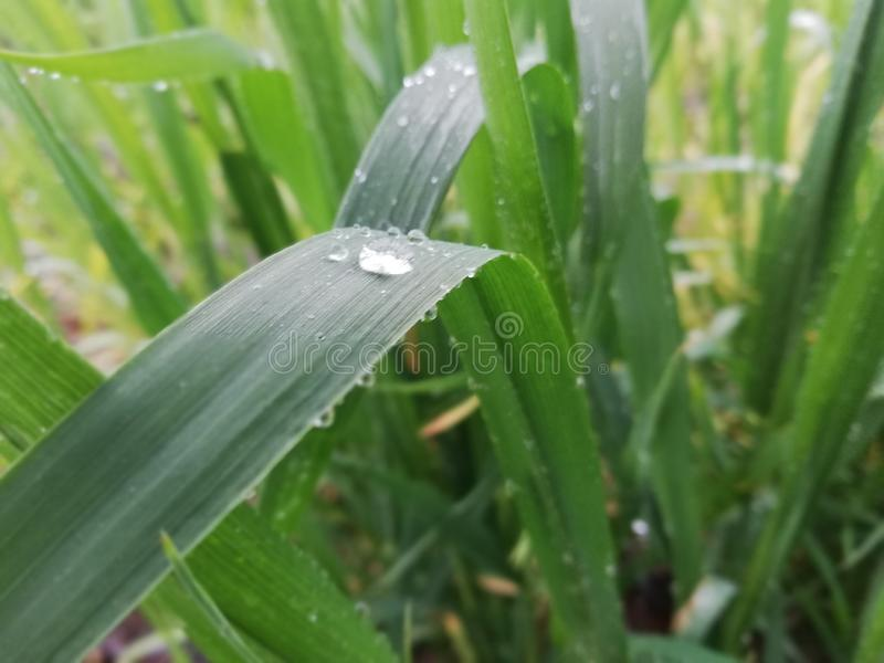 Βροχερό χρονικό PIC στοκ εικόνες
