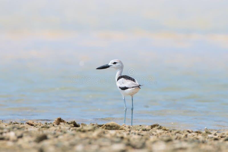 Βροχοπούλι καρτών στην παραλία στοκ εικόνες με δικαίωμα ελεύθερης χρήσης