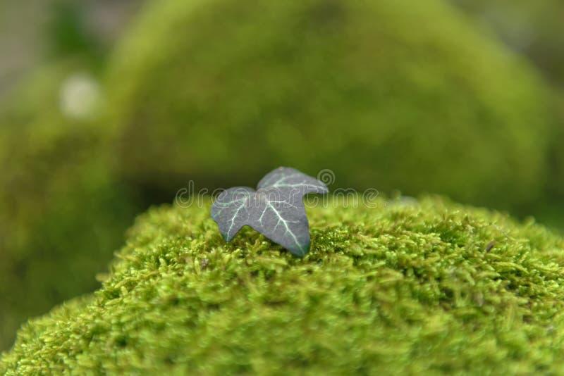 Βρύο που απομονώνεται πράσινο στοκ εικόνα με δικαίωμα ελεύθερης χρήσης