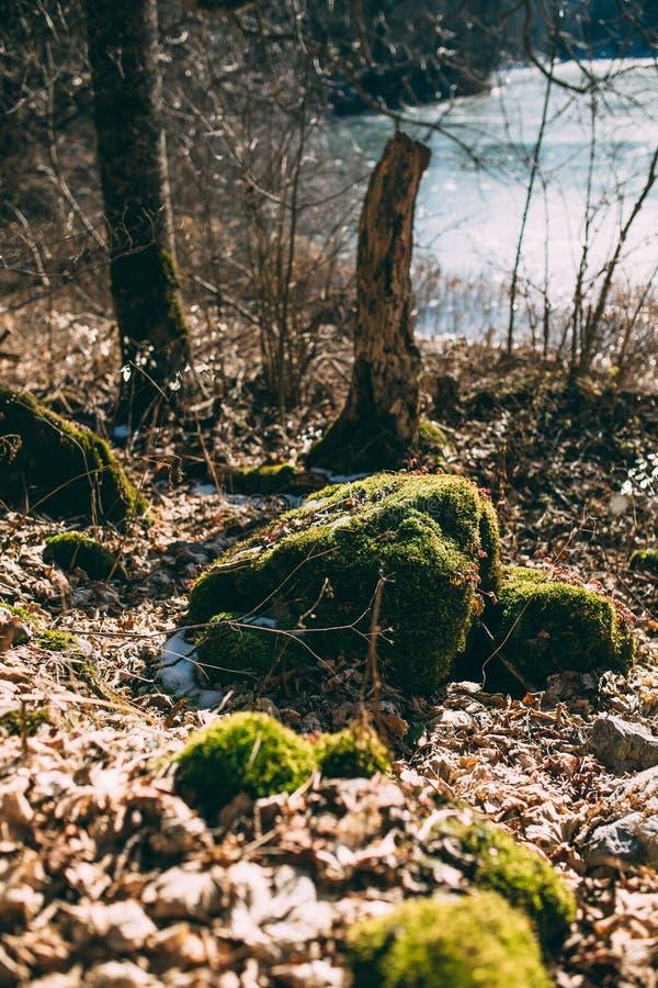 Βρύο σε ένα κολόβωμα στο δάσος στοκ φωτογραφία