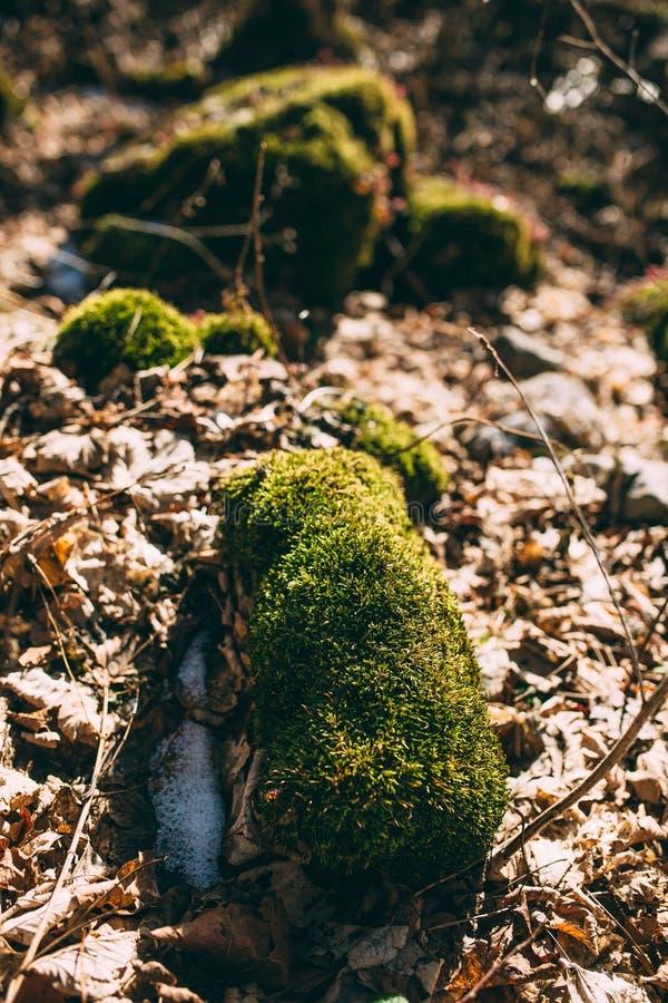 Βρύο σε ένα κολόβωμα στο δάσος στοκ φωτογραφία με δικαίωμα ελεύθερης χρήσης