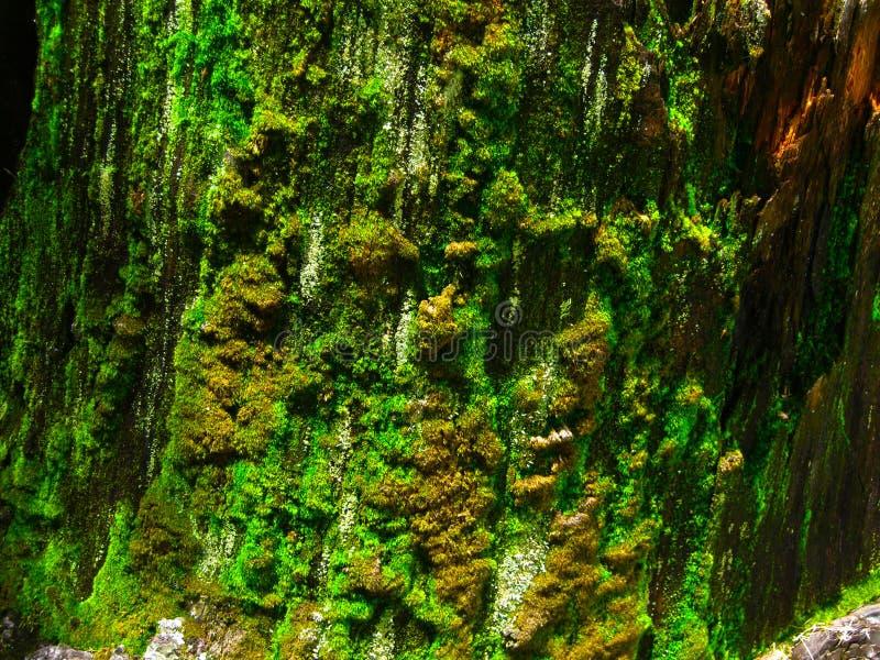 Βρύο στο δέντρο στοκ φωτογραφίες