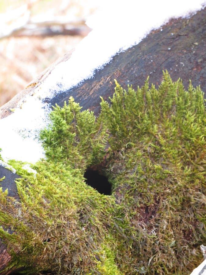 Βρύο στο δέντρο στοκ φωτογραφία με δικαίωμα ελεύθερης χρήσης