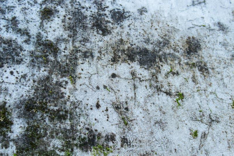 Βρύο στο παλαιό πάτωμα τσιμέντου στοκ φωτογραφίες με δικαίωμα ελεύθερης χρήσης