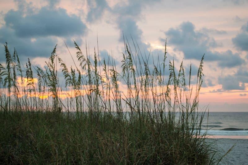 Βρώμες θάλασσας στην παραλία στην ανατολή στοκ φωτογραφίες με δικαίωμα ελεύθερης χρήσης