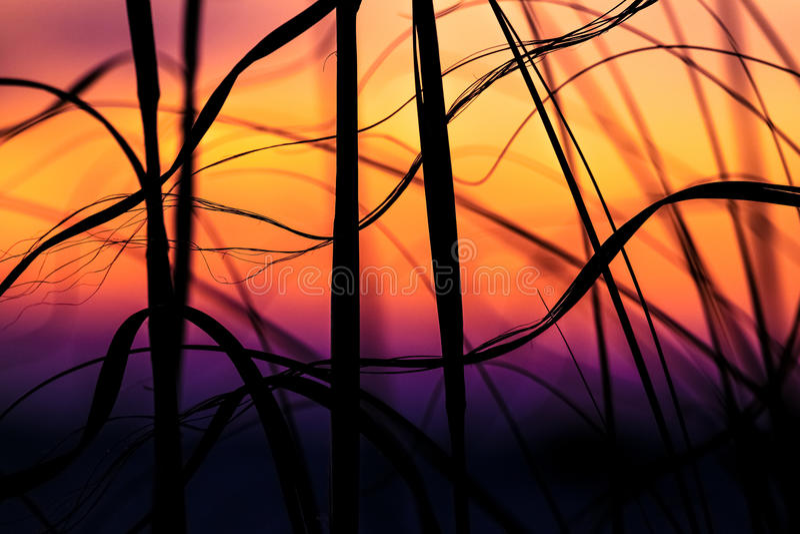 Βρώμες θάλασσας στην παραλία Pensacola στοκ φωτογραφία με δικαίωμα ελεύθερης χρήσης