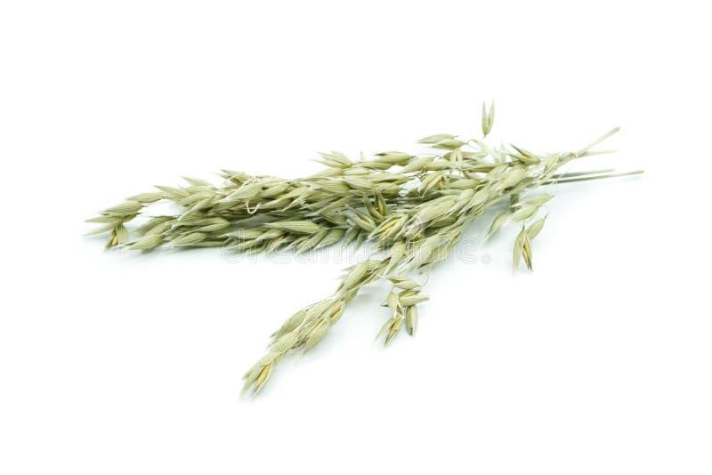 Βρώμη με oatmeal που απομονώνεται στο άσπρο υπόβαθρο στοκ εικόνες με δικαίωμα ελεύθερης χρήσης