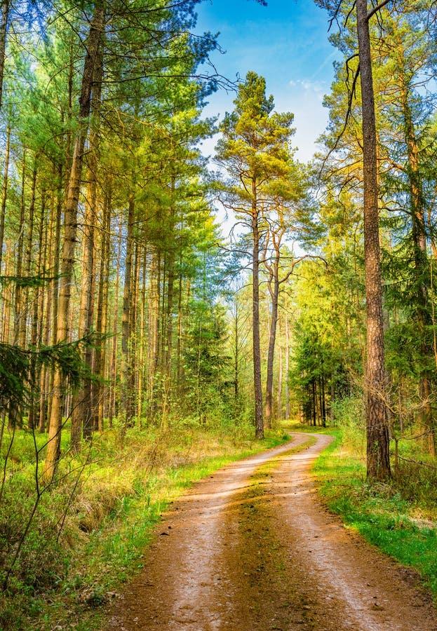 Βρώμικος δρόμος στο αειθαλές δάσος μια όμορφη ημέρα στοκ φωτογραφίες με δικαίωμα ελεύθερης χρήσης