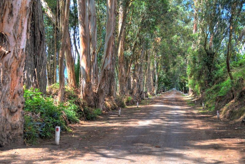 Βρώμικος δρόμος με τα δέντρα παράλληλα στοκ εικόνες με δικαίωμα ελεύθερης χρήσης