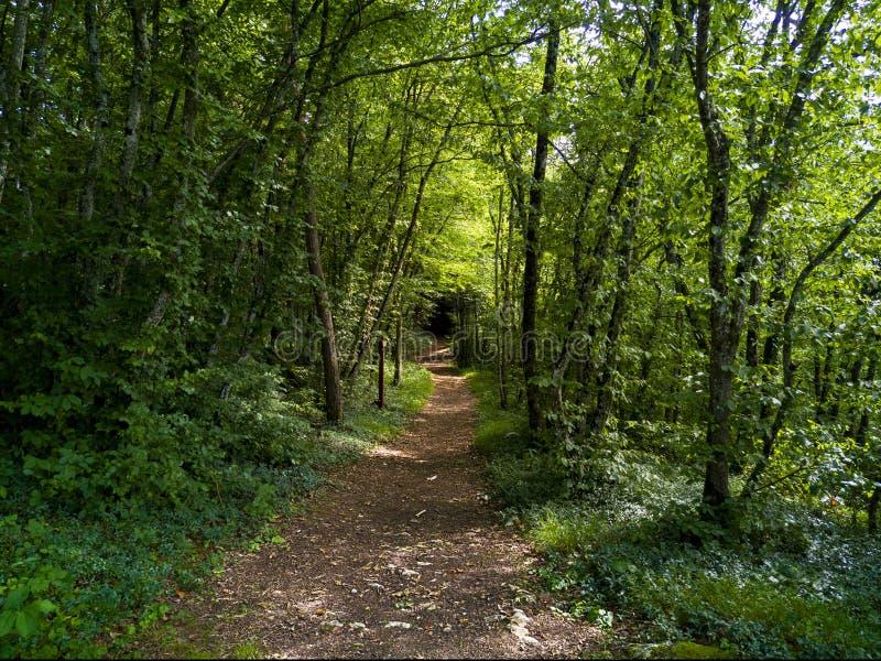 Βρώμικος δρόμος σε ένα δάσος στοκ φωτογραφία με δικαίωμα ελεύθερης χρήσης