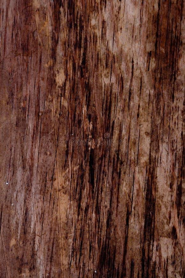 βρώμικο δάσος ανασκόπηση&sig στοκ φωτογραφίες με δικαίωμα ελεύθερης χρήσης