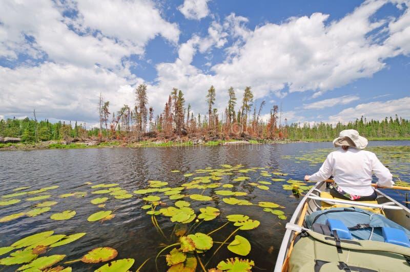 βόρεια δασικά βόρεια δάση ελωδών περιοχών στοκ φωτογραφία με δικαίωμα ελεύθερης χρήσης