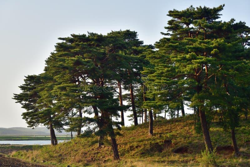 Βόρεια κορεατική φύση στοκ εικόνα