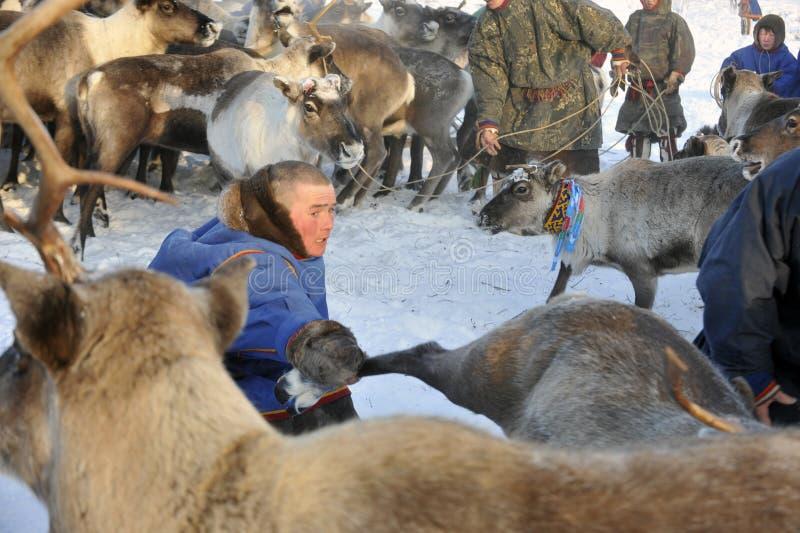 Βόρεια aboriginals Ρωσία Yamal Nadym στοκ φωτογραφία