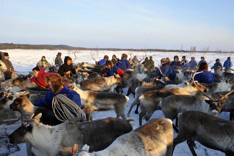 Βόρεια aboriginals Ρωσία Yamal Nadym στοκ εικόνα