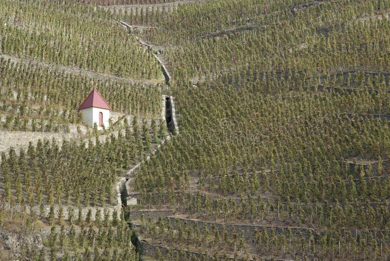 βόρειοι αμπελώνες κοιλάδων Ροδανού στοκ εικόνα με δικαίωμα ελεύθερης χρήσης