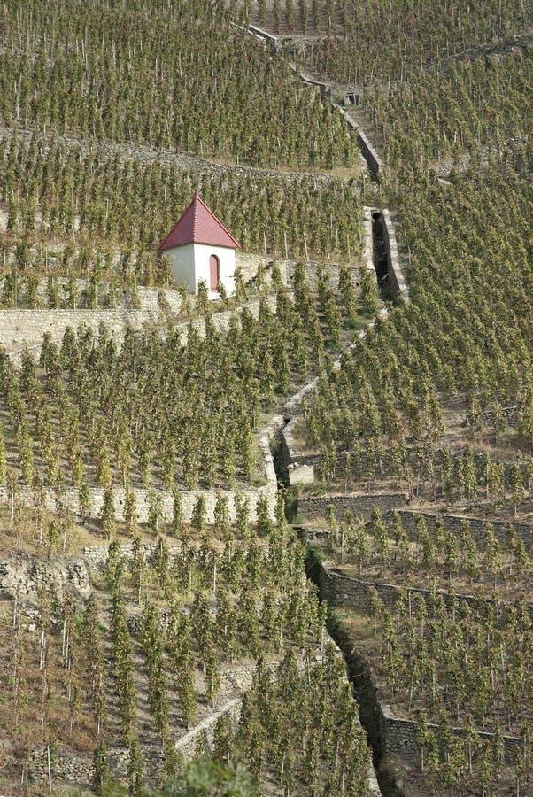 βόρειοι αμπελώνες κοιλάδων Ροδανού στοκ φωτογραφίες με δικαίωμα ελεύθερης χρήσης