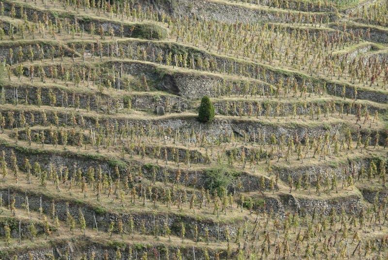 βόρειοι Ροδανός αμπελώνες κοιλάδων της Γαλλίας στοκ εικόνα