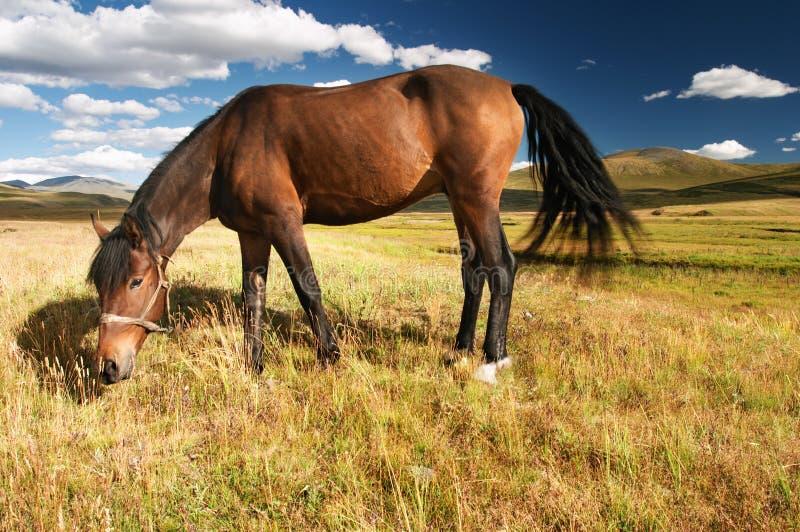 Download βόσκοντας άλογο στοκ εικόνες. εικόνα από ουρανός, σύννεφα - 2230076