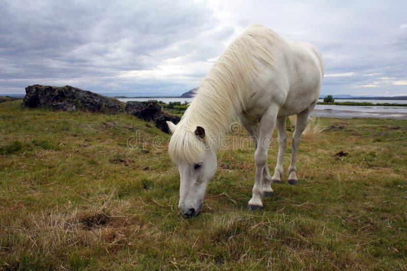 Download βόσκοντας άλογο στοκ εικόνα. εικόνα από πράσινος, ουρανός - 22786645