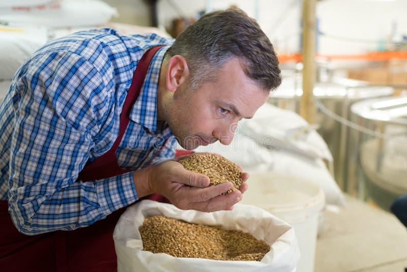 Βύνη μπύρας εκμετάλλευσης εργαζομένων ζυθοποιείων στα χέρια στοκ εικόνα με δικαίωμα ελεύθερης χρήσης