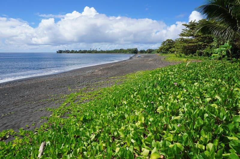 Βλάστηση στη μαύρη παραλία άμμου του νησιού της Ταϊτή στοκ εικόνες