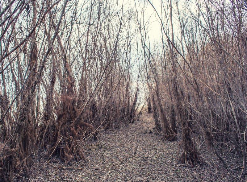 Βλάστηση φθινοπώρου στοκ φωτογραφίες με δικαίωμα ελεύθερης χρήσης