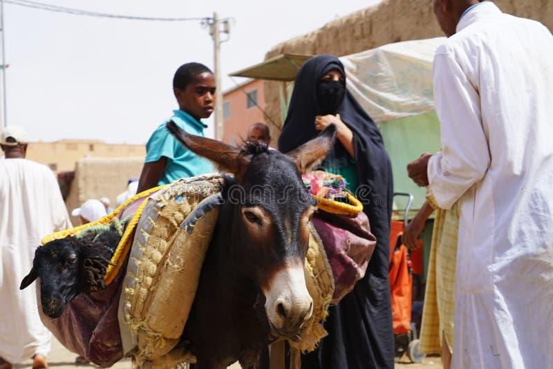 Γάιδαροι ενός γυναικών μορίων burqa που σταθμεύουν στο παζάρι της πόλης Rissani στο Μαρόκο στοκ εικόνες