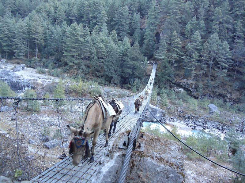 Γάιδαρος που διασχίζει τη γέφυρα στοκ εικόνες