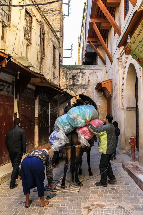 Γάιδαρος σε Medina του Fez στο Μαρόκο στοκ φωτογραφία με δικαίωμα ελεύθερης χρήσης