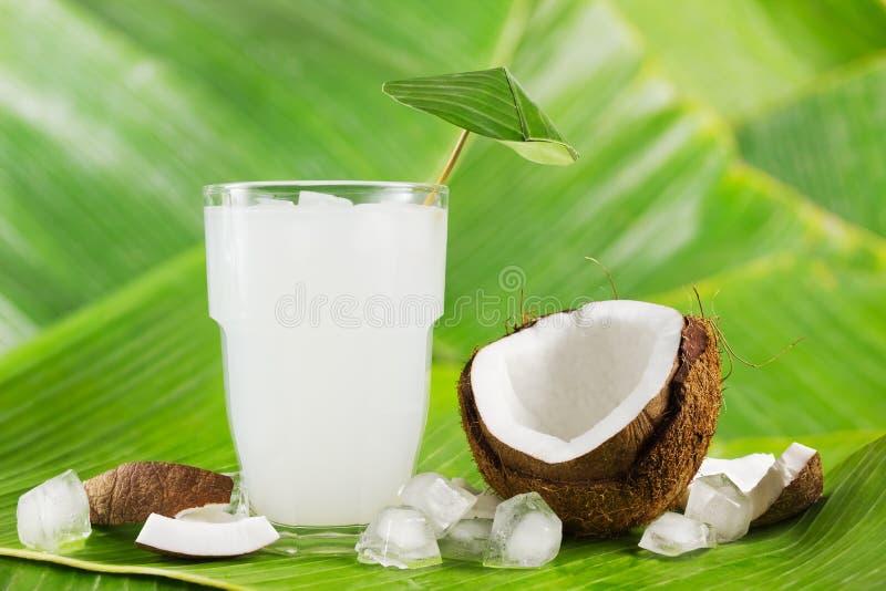 Γάλα καρύδων στοκ εικόνες με δικαίωμα ελεύθερης χρήσης