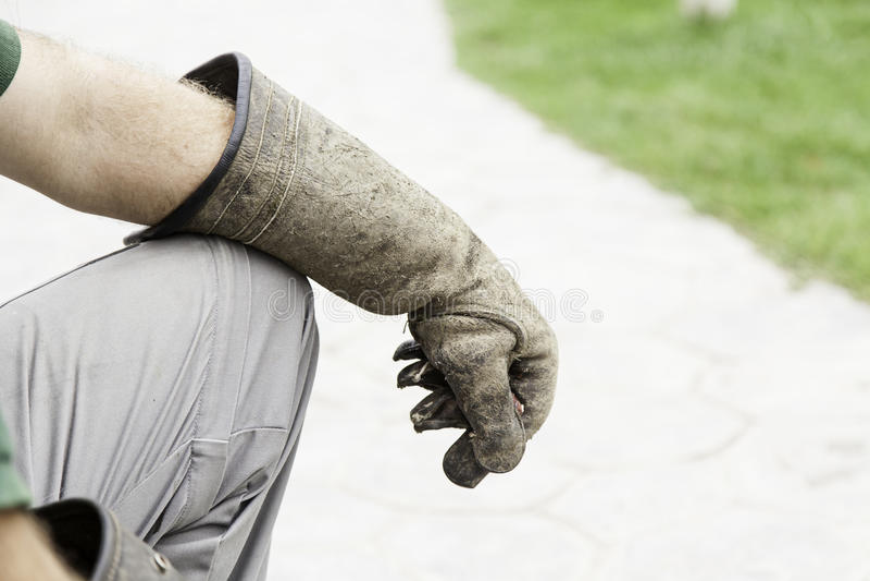 Γάντι εκτροφής γερακί πουλιών στοκ φωτογραφία με δικαίωμα ελεύθερης χρήσης