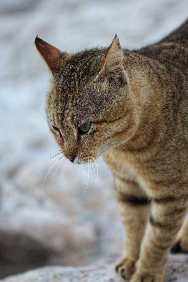 γάταη στοκ εικόνες με δικαίωμα ελεύθερης χρήσης