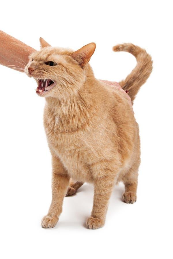 γάταη Petting προσώπων στοκ εικόνα με δικαίωμα ελεύθερης χρήσης