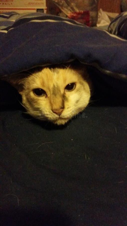γάτα άνετη στοκ εικόνες