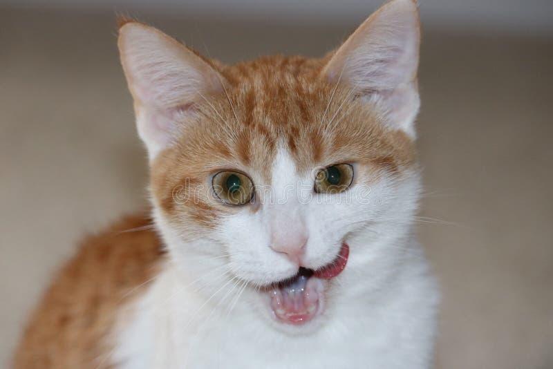 γάτα άτακτη στοκ εικόνα με δικαίωμα ελεύθερης χρήσης