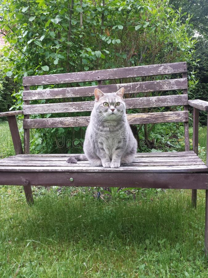 Γάτα ένα Highness στοκ εικόνες